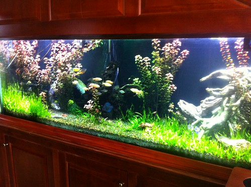 Live Planted Aquarium - Private Residence - CT - 1