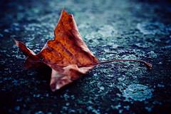 Anglų lietuvių žodynas. Žodis bluish reiškia a melsvas lietuviškai.