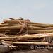 Fulani still life - drying grain