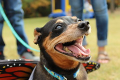 """Dogs, dog park, richmond • <a style=""""font-size:0.8em;"""" href=""""http://www.flickr.com/photos/31682982@N03/22535100051/"""" target=""""_blank"""">View on Flickr</a>"""
