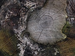 Projekt: Baumstmpfe (di.fe88) Tags: wood abstract tree nature project stumpf holz