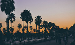Sunset by the beach (Nicole Favero) Tags: barcelona camera city travel sunset sky people sun cute travelling verde love beach palms reflex amazing cool nikon mine day awesome sunny forever lovely cuteness barcellona tout nikond5000