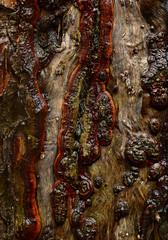 Beech Bark Detail ** (CactusD) Tags: macro nikon 85mm bark micro f28 tiltshift pce bernwoodforest 85pce d800e mtsub