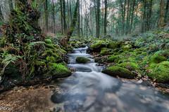 El rio que nos lleva (Perurena) Tags: trees naturaleza musgo verde green water rio river agua arboles pontevedra vegetación corriente efectoseda riodasfragas