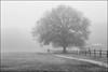 Solitude (FiddleFlix) Tags: blackandwhite bw usa tree fog fence walking foggy northcarolina garner lakebensonpark niksilverefexpro