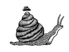 Snail (Don Moyer) Tags: snail ink drawing sketchbook moyer donmoyer brushpen