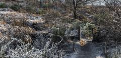 161230_006-335.jpg (Jacky Vastmans) Tags: limburg maasmechelen mechelseheide beriezen bevroren bos cold freezing frozen gate koud landscape landschap pad panorama path poort poortje sneeuw sneeuwlandschap snow snowy stilleven vriezen winter winterlandschap wood