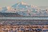 Mount Baker View from Boundary Bay (wmckenziephotography) Tags: birds canon7dmarkii coast landscape mountain mountainpeak mountains mountbaker nature seatomountain tamron150600 vancouver