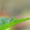 Mantis (b. inxee♪♫) Tags: mantis insect macro