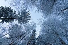 A9900903_s (AndiP66) Tags: winterstimmung altbüron melchnau luzernerhinterland rottal kanton luzern cantonoflucerne bern cantonofberne nebel fog mist gefroren reif frosted frozen hoarfrost winter sony sonyalpha 99markii 99ii 99m2 a99ii alpha ilca99m2 slta99ii sigma24105mmf4dghsmart sigma 24105mm f4 amount andreaspeters