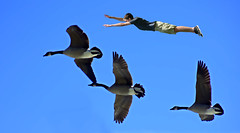 Flocking With Geese (swong95765) Tags: sky fly birds geese guy kid airbourne flight human animal experience