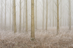 Taken (jellyfire) Tags: forest hoxne landscape landscapephotography sonnartfe55mmf18za sony sonya7r winter atmospheric cold fog frozen hoarfrost leeacaster mist trees woods wwwleeacastercom zeiss