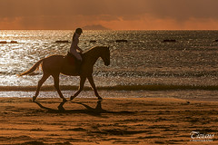 riding at sunset (Tiziano Photography) Tags: riding horse beach sunset sea isle castiglionedellapescaia backlight sky cloud nikond750 d750 nikon cavalcare cavallo spiaggia tramonto mare isola controluce cielo nuvole