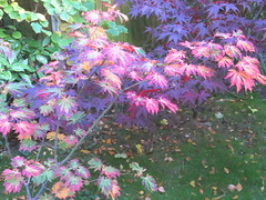 IMG_0264 (starst0rm*<(*?*)>*) Tags: acers trees china
