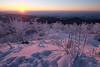 Black Forest Sunset (coco_cn) Tags: mummelsee winter germany schwarzwald blackforest sunnset tree white snow wandern winterzauber entspannung winterliche ausflug fuji xt1 zeiss 12mm