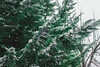 White January 003 (domjuniorlemma) Tags: snow cold freeze white light shadow nature leaf leaves flowers falling winter january tree grass sky clouds snowy photo photography photographer photoshop green blue yellow temperature canon
