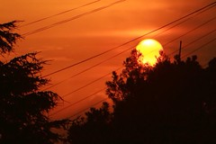 (juliayeger) Tags: rebel canon saturation contrast 300mm trees red orange buenosaires wires city warm yellow colours explore naturaleza naturw colorea amanecer atardecer resplandor luz sunshine light sol sun sub