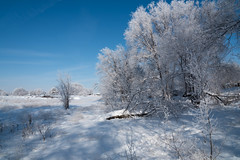 Winter Scene (maytag97) Tags: maytag97 idaho rural winter tree field blue sky cold quiet serene beautiful hoar frost nikon d750