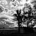 Country Australia II (pnarsiman) Tags: australia canowindra orange clouds tree cloud landscape bw black white trees