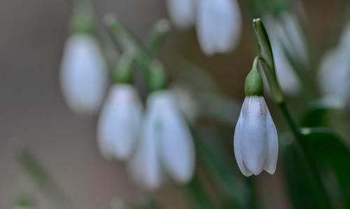 Odore di primavera