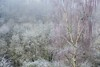 The Magic of Winter (Sarah Howard Photography) Tags: cotswolds gloucestershire uk england winter frost cold landscape trees woodland