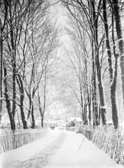 View from Sivertsen Hotel, Førde, ca. 1915. (Fylkesarkivet i Sogn og Fjordane) Tags: norway noreg norge sognogfjordane sunnfjord førde olaifauske town winter snow road boathouse pharmacy bakery store sivertsenhotel