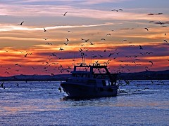 Regresando al puerto (Antonio Chacon) Tags: andalucia atardecer marbella málaga mar mediterráneo costadelsol cielo españa spain sunset