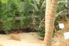 ah Spideeeer (Derya Elmas) Tags: canon zoo spider interesting focus natural zoom natur spinne horrible spinnennetz wilhelma bigspider schrecklich