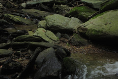 creek (Molly Des Jardin) Tags: park trees usa green water rock stone creek forest flow waterfall moss rocks state pennsylvania stones rocky running lancaster algae 2014 susquehannock drumore 43215mm