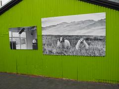 Wall, central Reykjavik!