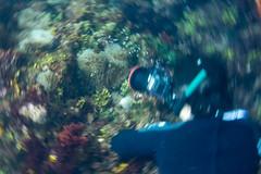 20150829-DSC_0738-2.jpg (d3_plus) Tags: sea sky fish beach japan scenery underwater diving snorkeling  shizuoka    apnea izu j4  waterproofcase    skindiving minamiizu       nikon1 hirizo  1030mm  nakagi 1  nikon1j4 1nikkorvr1030mmf3556pdzoom beachhirizo misakafishingport  1030mmpd nikonwpn3 wpn3