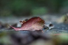 Summer Don't Leaf Me (twinsfan7777) Tags: autumn red summer fall me nature colors leaves st vintage paul leaf minneapolis falls hidden dont helios simplistic