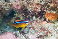 20150923-DSC_5695.jpg (d3_plus) Tags: sea sky fish beach japan scenery underwater diving snorkeling  shizuoka    apnea izu j4           hirizo  1030mm  nakagi 1   1030mmpd wpn3