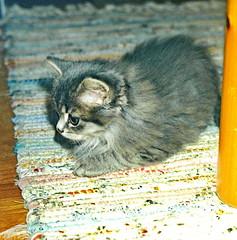 00376 (d_fust) Tags: cat kitten gato katze  macska gatto fust kedi  anak katt gatito kissa ktzchen gattino kucing   katje     yavrusu