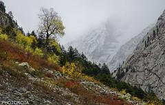 EXHILARATE (PHOTOROTA) Tags: autumn pakistan colors nikon flickr abid d7000 photorota