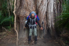 Toots with a big tree (4seasonbackpacking) Tags: trees winter newzealand tree walking hiking backpacking nz southisland toots ta tramping nobo heaphytrack achara heaphy teararoa theheaphytrack teararoatrail 4seasonbackpacking fourseasonbackpacking tatrail