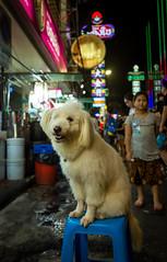 Bangkok Street Dog 2 (gary_p_p) Tags: bangkok streetphotography bangkokstreet
