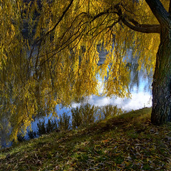 Sun's come back today (Varvara_R) Tags: autumn fall water leaves weather yellow reflections happy russia sunny coth supershot coth5