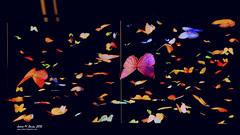 Butterflies Galore (Urban_Integration) Tags: abstract black retail portland colorful downtown butterflies void fluttering windowdressing