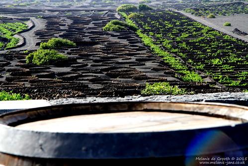 Vineyards Artesania - Le Garia