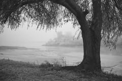 Mist III (Capturedbyhunter) Tags: fernando caçador marques fajarda salvaterra de magos praia doce monochrome monocromático black white preto e branco pentax k1 revuenon 112 f12 12 55mm 55 mc manual focus focagem foco outdoor mist pentaxart nevoeiro inverno winter