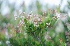 © monica silveira (© monica silveira | fotografia) Tags: flora floraderestinga verde natureza nikon nikkor aoarlivre bokeh flor florzinha luz