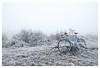 Givré (kick-my-pan) Tags: alexsinger randonneuse perche givre froid ice galce snow vélo route forêt bois vache landscape paysage nature chemin