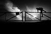 Climbing the fence in backlight (hzeta) Tags: climbing fence backlight trepando tranquera contraluz luz light sun sol backlit person persona silhouette silueta campo countryside tresspassing ingresando