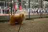 javits center (Charley Lhasa) Tags: ricohgrii grii 183mm 28mm35mmequivalent iso2500 ¹⁄₆₀secatf28 0ev aperturepriority pattern noflash r010945 dng cropped taken161210192403 uploaded161217004547 2stars flagged adobelightroomcc20158 lightroomcc20158 adobelightroom lightroom charley charleylhasa lhasaapso dog walk sidewalk night evening javitscenter conventioncenter door doors entrance hellskitchen clinton midtownwest manhattan newyorkcity nyc newyork ny tumblr161216 httpstmblrcozpjiby2fzfj3c
