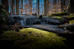 Woodland Wonders (Angela D Beck) Tags: woodland forest moss waterscape nc nikon d750 stream creek