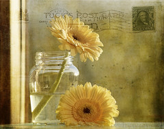 A postcard for Margie ;o) (Elisafox22 slowly catching up again!) Tags: elisafox22 sony ilca77m2 100mmf28 macro macrolens telemacro sliderssunday hss postcard vintage yellow daisies petals capedaisies glass jar jamjar window sunshine texturing photomanipulation photoshop texture postprocessing photomanipulated textures elisaliddell©2017 stilllifephotoart