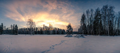 Unexpected morning II (A. Stavrovich) Tags: winter pavlovsk pavlovskypark december park russia russianwinter sunrise sun sunrays clouds sky colors colorful field grass trees canon canon5dmarkii canonef1740mmf4l panorama panoramic scenery outdoor wildnature breathtaking beautiful yellow red orange forest hdr sunset cloud landscape snow skyline serene