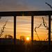 Framed sunrise - HFF!