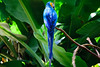 Arara azul (Hari Haru) Tags: arara cataratas fozdoiguaçu cataratasdoiguaçu waterfall falls nature landscape forest green birds water brazil blue